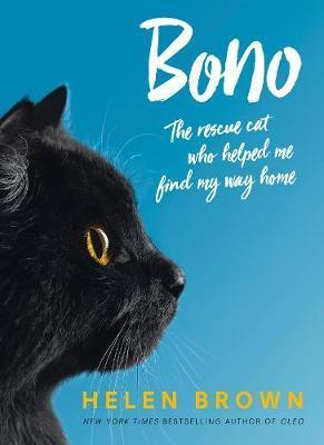 Bono the rescue cat who helped me find my way hom